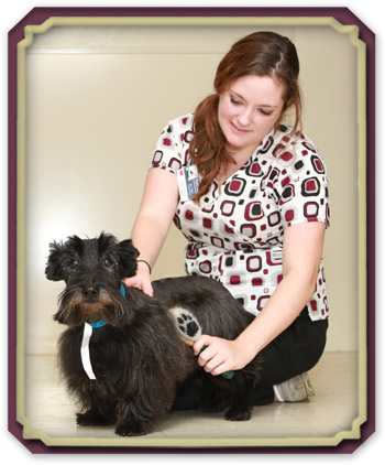 Dermatology for dogs and cats
